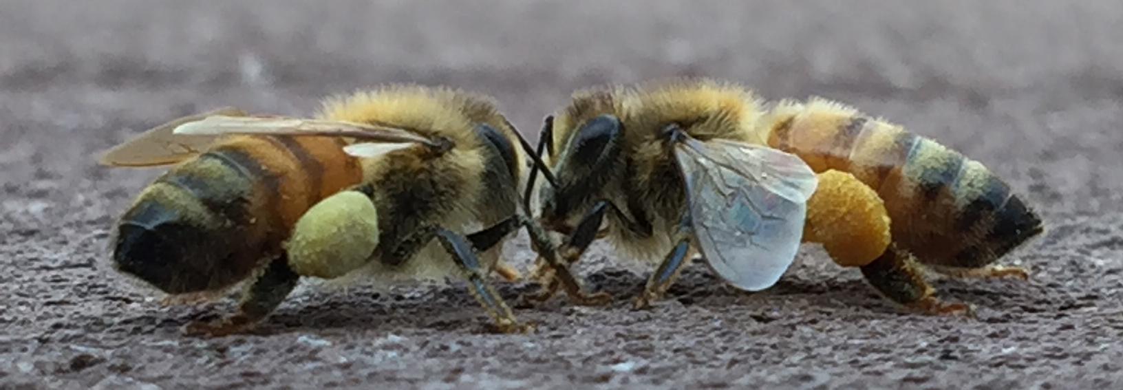 Milwaukee Waukesha Beekeepers Association